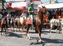 Aprovado Projeto que define regras para a Cavalgada de Primeiro de Junho
